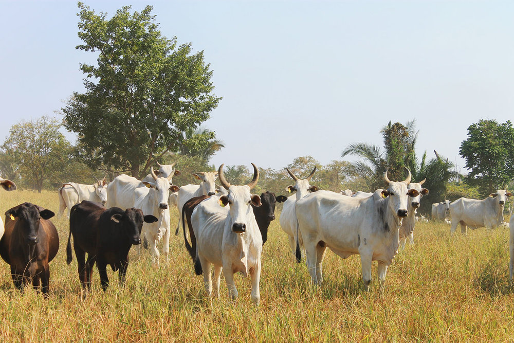 Sustainable Livestock Management [7 ECTS]